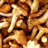 Comment nettoyer des champignons frais