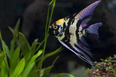 Comment nettoyer un aquarium : les plantes artificielles