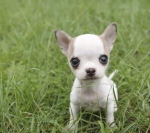 nettoyer-les-jouets-du-chien