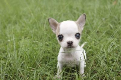 Comment nettoyer les jouets du chien