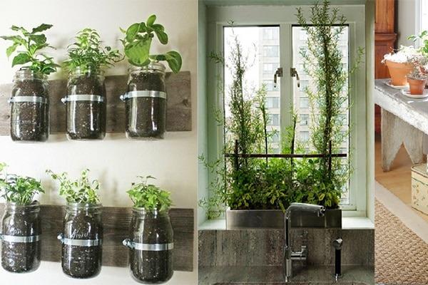 , Un jardin dans la maison avec épices et légumes